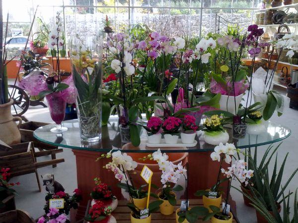 Floristeria ostende floristeria flores y plantas for Plantas decorativas de interior