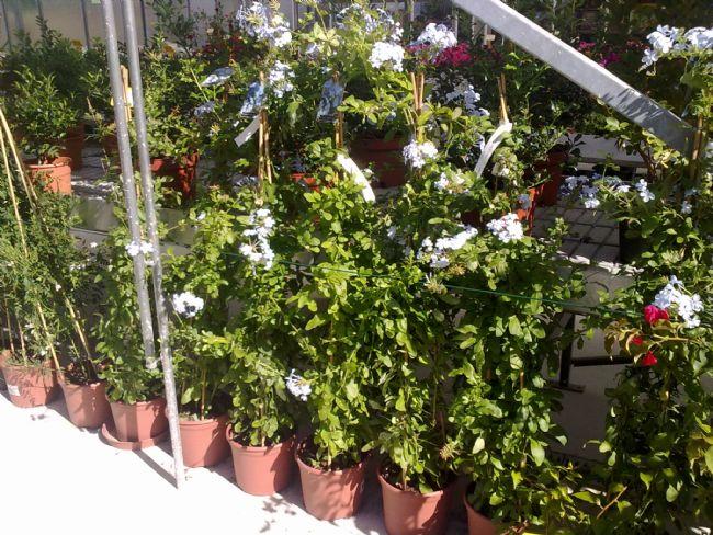 Floristeria ostende floristeria flores y plantas - Plantas para vallas ...